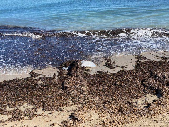 playa Cartagena 1024x768 1